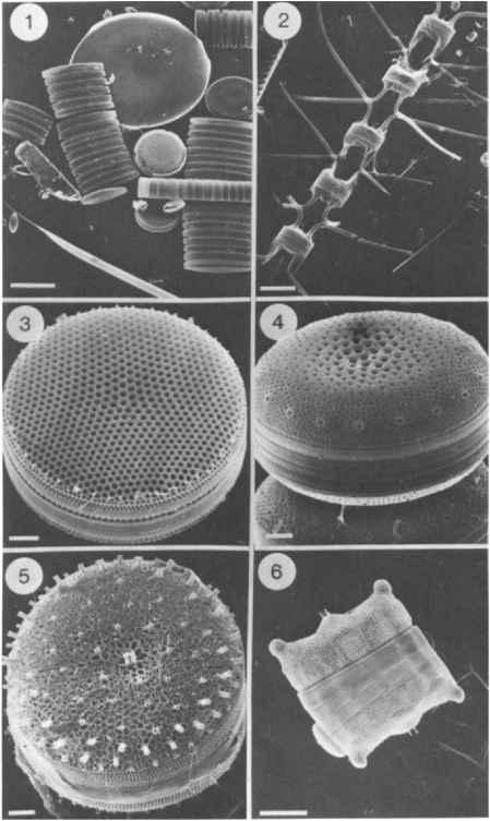 Phytoplankton - Antarctic Sector