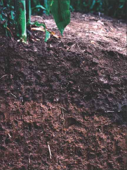Fertile Soil Composition