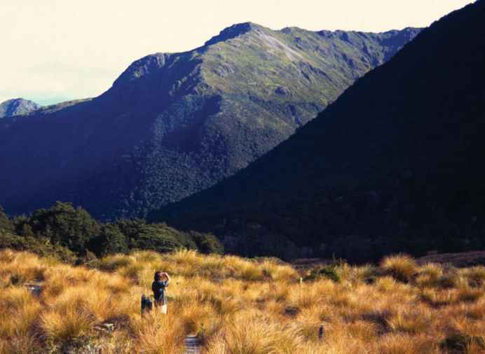 Tussock Grass Non Polar Alpine Regions