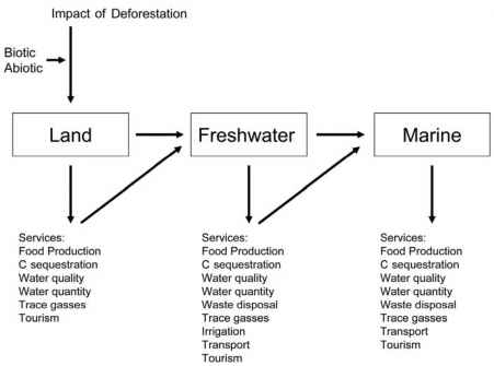 Cascading Effects of Deforestation on Ecosystem Services Across ...