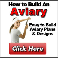 How to Build An Aviary + Free Bonus Books