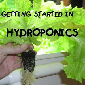 Hydroponics Simple System