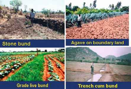 Crop Management Rainfed