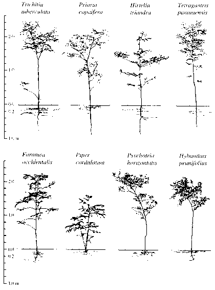 Tropical Peatland Trees Root Study
