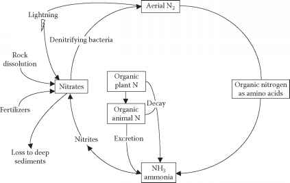 Nitrogen cycle wastewater treatment climate policy watcher figure 818 nitrogen cycle ccuart Image collections